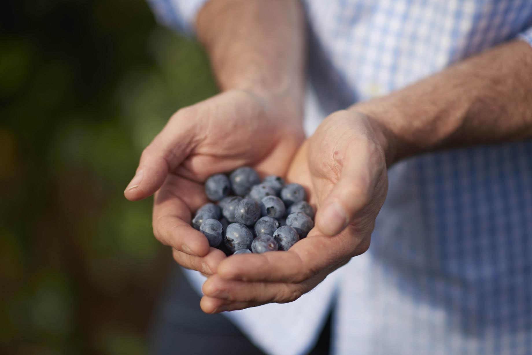 Blueberries_Mundubbera_160921_0020