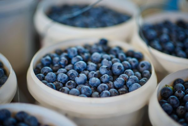Blueberries at Mundubbera