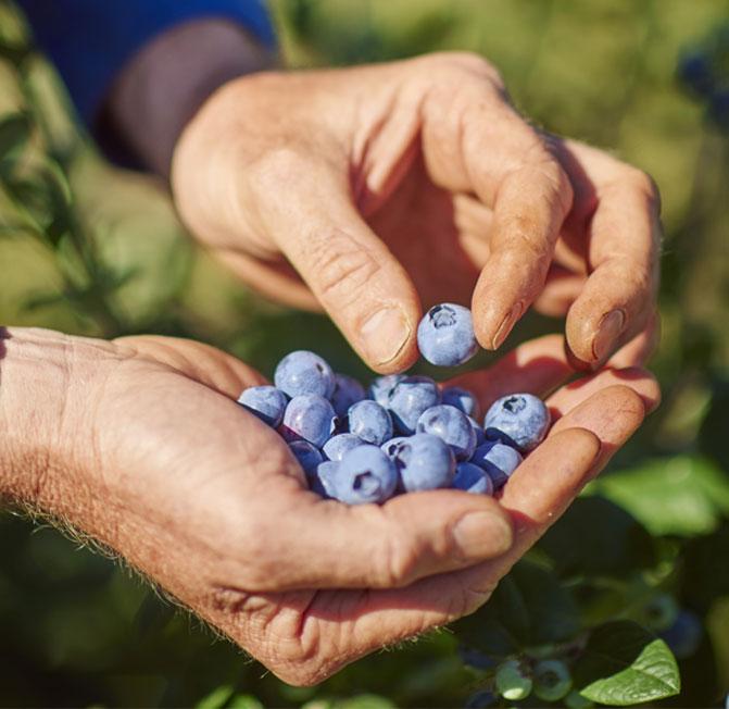 blog_tas-berries