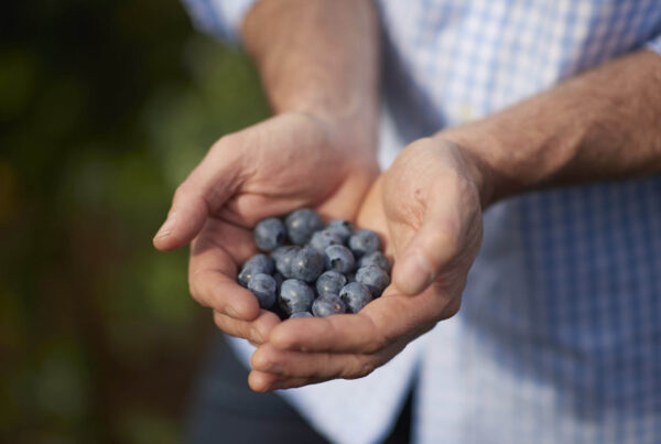 Blueberries_Mundubbera_160921_0020