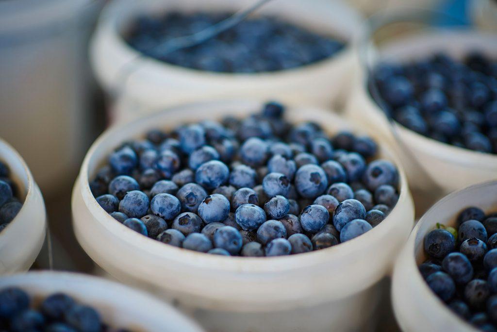 Blueberries at Mundubbera