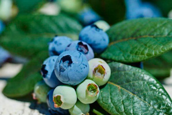 smartberries_styleshot-png